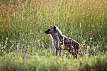 Serengeti 2019