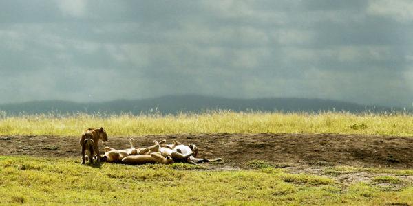 Serengeti2019