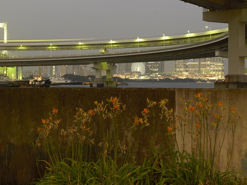 """""""Dans la Nature des Choses"""": vues de nature urbaine la nuit à Tokyo."""